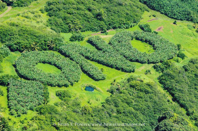 ono organic farms maui hawaii tropical fruit coffee local